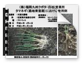 H28年元肥効果タマネギ_05
